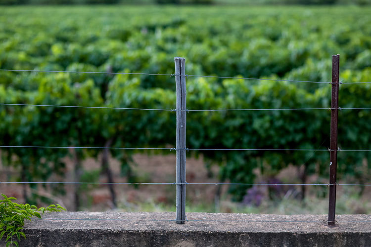Fence on retaining wall against vineyard