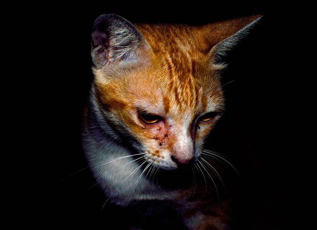 Cat Cats Pets Pet Kitty Kitten Animal Animals Mammal Mammals Fur Night Black Dark Moment Orange Color Homeless Homeless Cats EyeEmNewHere The Portraitist - 2017 EyeEm Awards Pet Portraits