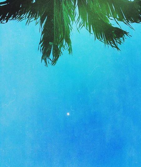 Moon Sky Palm Tree
