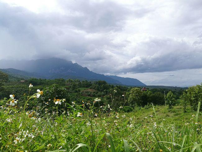 Chiang Dao big mountainHello World Relaxing Enjoying Life OpenWorld HuaweiP9 Nature