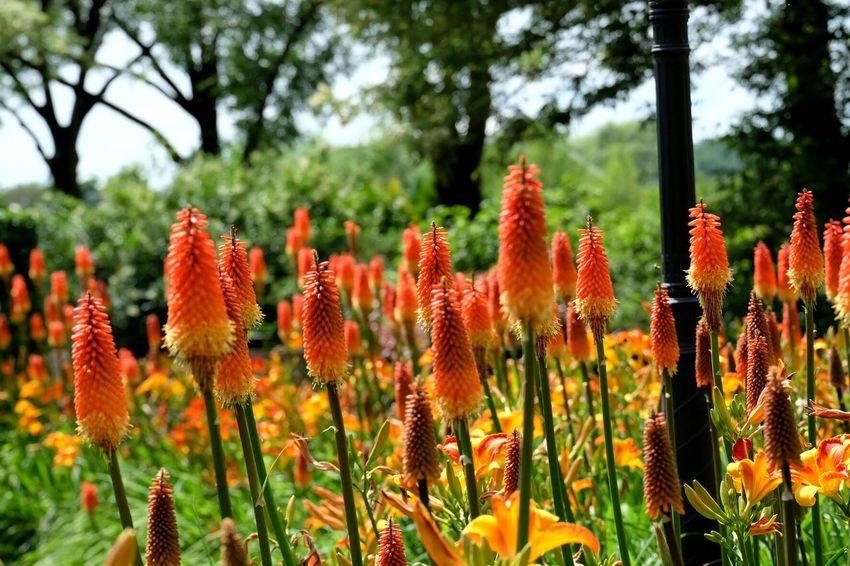 Tuinen Van Appeltern Flowers Garden Photography Garden Orange Orange Flowers Nature Nature_collection Nature Photography Naturelovers Appeltern