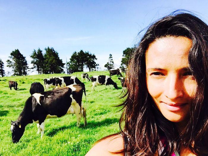 Escaping Cows