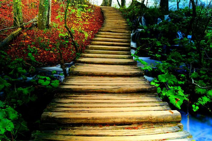 Silent Moment Silent Autumn Nature Photography My Places NatureNature_collection EyeEm Nature Lover EyeEm Gallery Stairs Stairway Mystery Wood A Walk In The Woods Zen Water_collection a moment of zen... A Moment Of Zen
