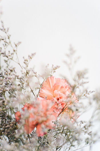 Beauty In Nature Blossom Botany Close-up Day Flower Flower Head Focus On Foreground Fragility Freshness Growth In Bloom Nature No People Outdoors Petal Plant Plant Life Scenics Season  Springtime Stem
