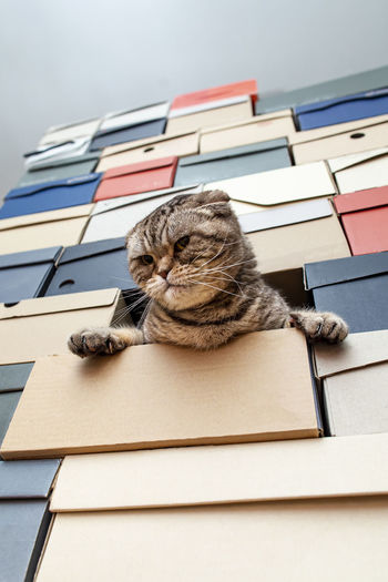 Low angle view of cat on book