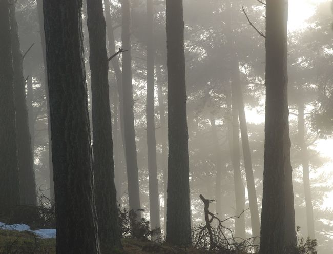 Morning Mist Beauty In Nature Branch Day Forest Growth Hazy  Landscape Mist Nature No People Outdoors Scenics Sky Snow Tranquil Scene Tranquility Tree Tree Trunk Winter Mist