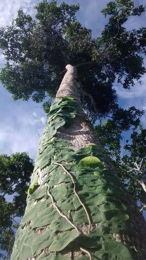 EyeEm Best Shots - Nature Tree And Sky EyeEm Best Shots - Trees Sky And Trees