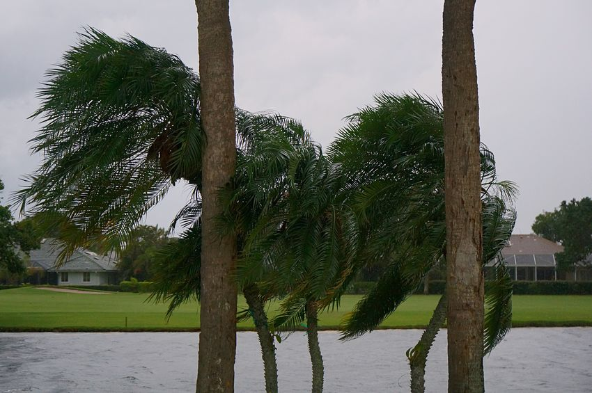 Storm Palm Trees Golf Course Storm Approaching Tree In Wind Blowing In The Wind... Tree Ominous Warning Sign