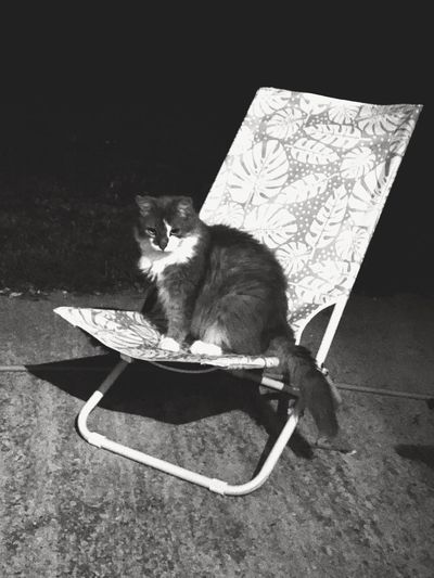 take a seat , please Bnw_cats Bnw_friday_eyeemchallenge Domestic Pets Cat Domestic Cat Domestic Animals Feline Looking At Camera