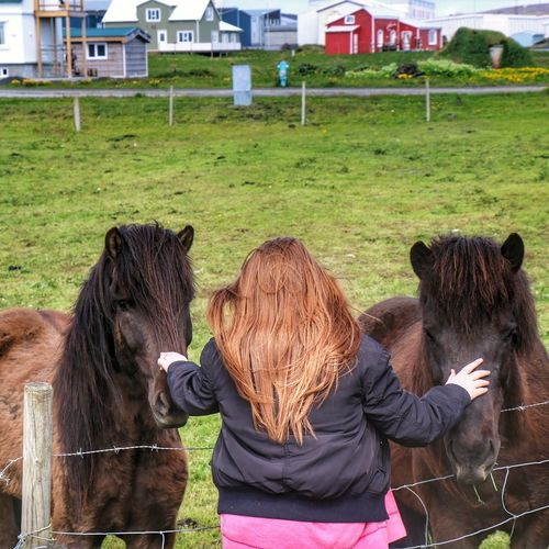 Horse Photography  Horses Summer Contry Living Nature Grindavik Green Grass Houses Redhairgirl Redhair