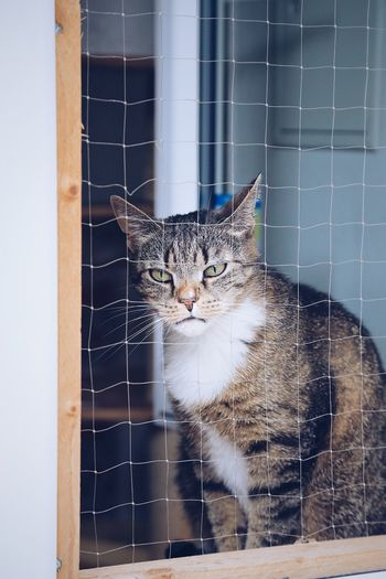 Cat in window looking out Individuality Full Frame Sitting Down Cute Cats Cats Pet Cat Cat Cafe Cat Home Full Length Single Animal Themes Animal Window One Animal No People Mammal Focus On Foreground Close-up Day Indoors  Cat Animal Wildlife Domestic Animals Domestic Wall - Building Feature Pets Domestic Cat Feline Vertebrate