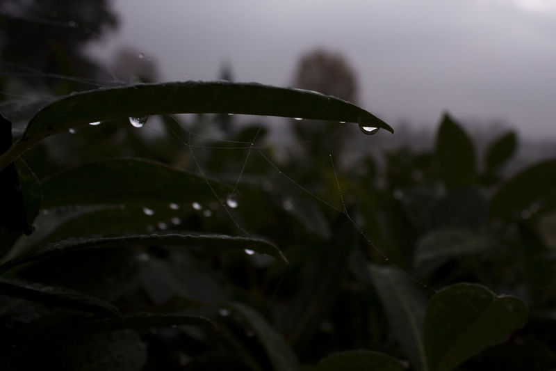 #capturetomorrow Water Plant Close-up Nature Drop Leaf No People Focus On Foreground Beauty In Nature Capture Tomorrow