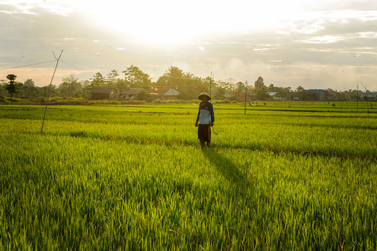the farmer A New Beginning EyeEm Selects EyeEmNewHere INDONESIA Culture Farm Farmer Rice Paddy Rice Field Natural