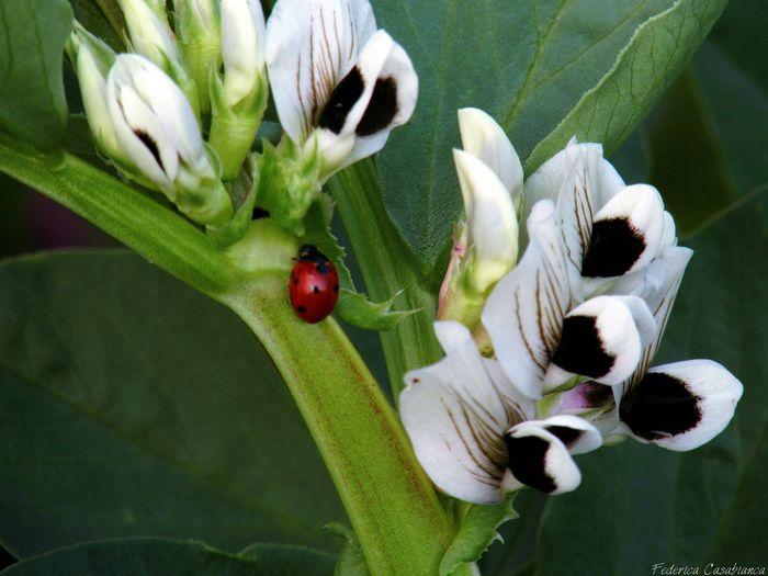 Rendere felici è la più gran fortuna♧ Coccinella Rosso Fuoco Nature_collection Flowers,Plants & Garden Green Eyemnaturelover Red Fortuna Love