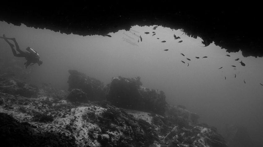 Dive Diving Seychelles Island