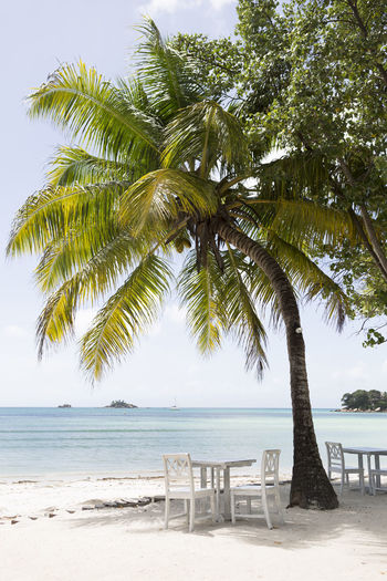 Tree Sea Beach Land Water Beauty In Nature Sky Tropical Climate Palm Tree Nature Tranquility Plant Growth Scenics - Nature Tranquil Scene Chair Horizon Over Water Day Sand No People Outdoors Coconut Palm Tree Praslin Praslin Seychelles Seychelles