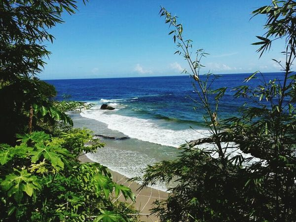 Beach Bum Bamboo PawPaw Ocean Paradise Ocean View