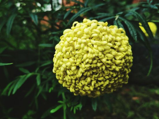 Flower Growth Nature Plant Beauty In Nature Yellow Green Color No People Fragility Freshness Flower Head Leaf Outdoors Close-up Plant Part Day Tree