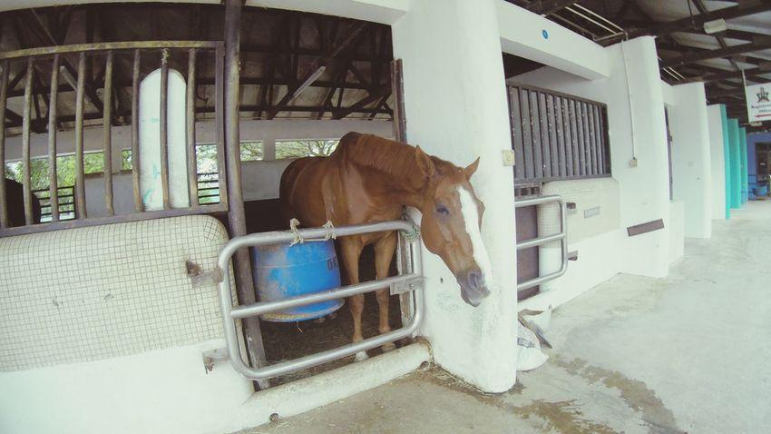 Weekend activity.. Horse Weekend Getaway Weekend Fun AwesomeDay FeelingCool