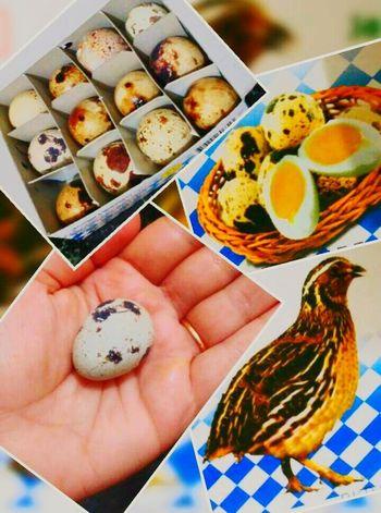 Eggofkoel Koel Cuckoo's Nest Cuckoo Egg Giftofnature Amazinglife Eggporn Eggs In The Nest Eggs Of Asian Koel