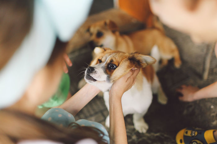 Canine Children Close-up Cute Day Dog Domestic Animals Focus On Foreground Leisure Activity Lifestyles Mammal Outdoors Part Of Pet Collar Pet Owner Pets Portrait Puppy Selective Focus Young Animal Pet Portraits