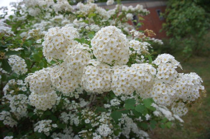Blume White Flower Weiße Blumen Weiße Blume Flower Nature Beauty In Nature Outdoors No People Ast Busch