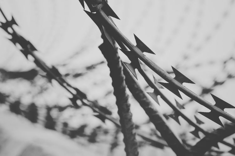 Low angle view of barbed wire fence against plants