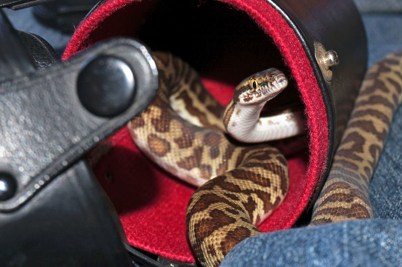 Close-Up Of Snake In Container