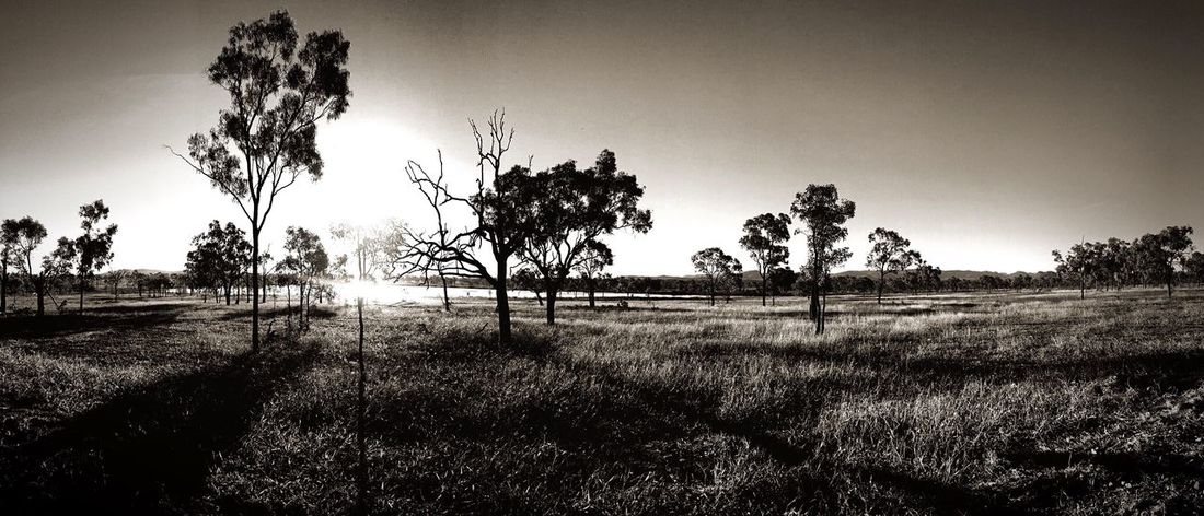 Travel Destinations Australia Tree Trees Black And White Blackandwhite Photography Landscape Landscape_Collection Black And White Photography Blackandwhite Trees And Sky Landscape_photography Landscapes Queensland