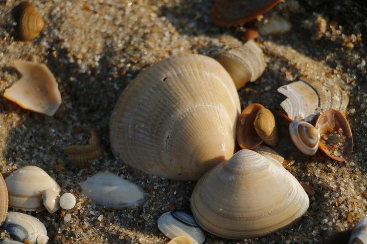 Shells at the
