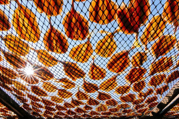 dried fish with direct sunlight Dried Food Dried Fish  Backgrounds Pattern Full Frame Close-up Animal Themes Sky Grid Hexagon