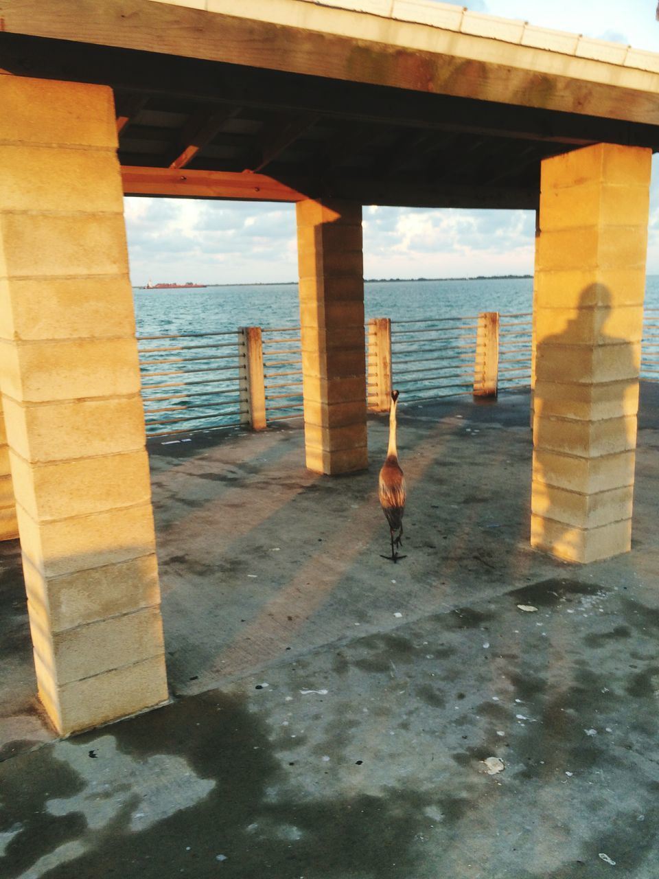 sea, architecture, built structure, water, real people, one person, nature, architectural column, men, day, bridge - man made structure, lifestyles, indoors, sky, horizon over water, underneath, under, one man only, people