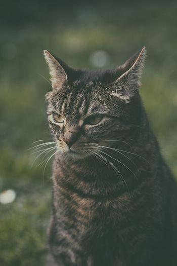 Animal Eye Cat