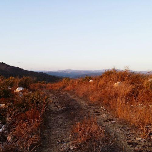 Mountain View Landscape_Collection Hi!