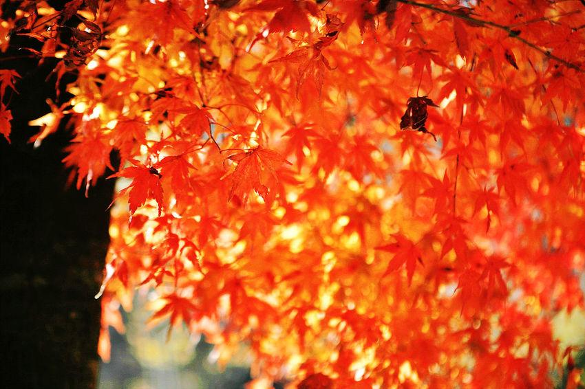 Munkyung Munkyungsaejae Autumn Autumn Colors Autumn Leaves Autumn Foliage South Korea Korea