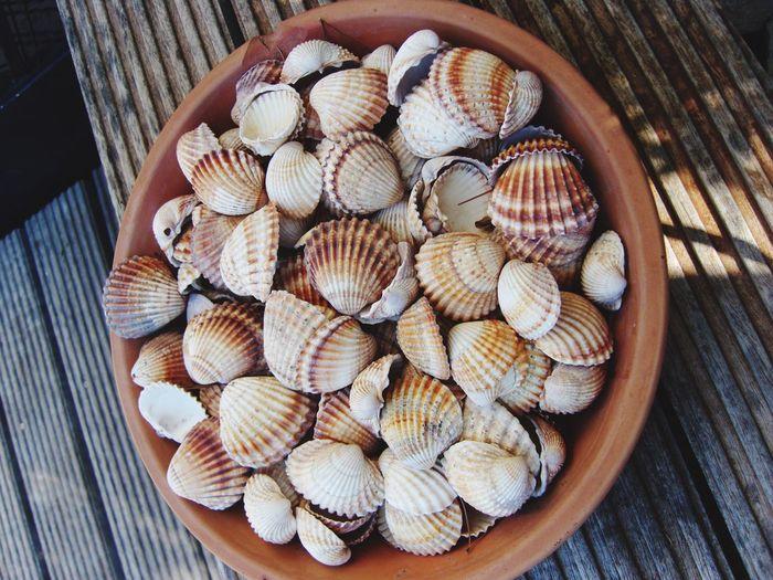Still Life Shells Sea Dekoration Sealife No People Brown Baige Home Interior Garden