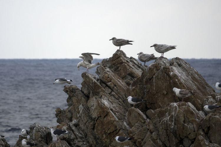 View of Janghohang, Samcheok, Gangwondo, South Korea Animal Themes Animal Wildlife Animals In The Wild Bird Day Janghohang Large Group Of Animals No People Outdoors Perching Sea Seagull Seaside