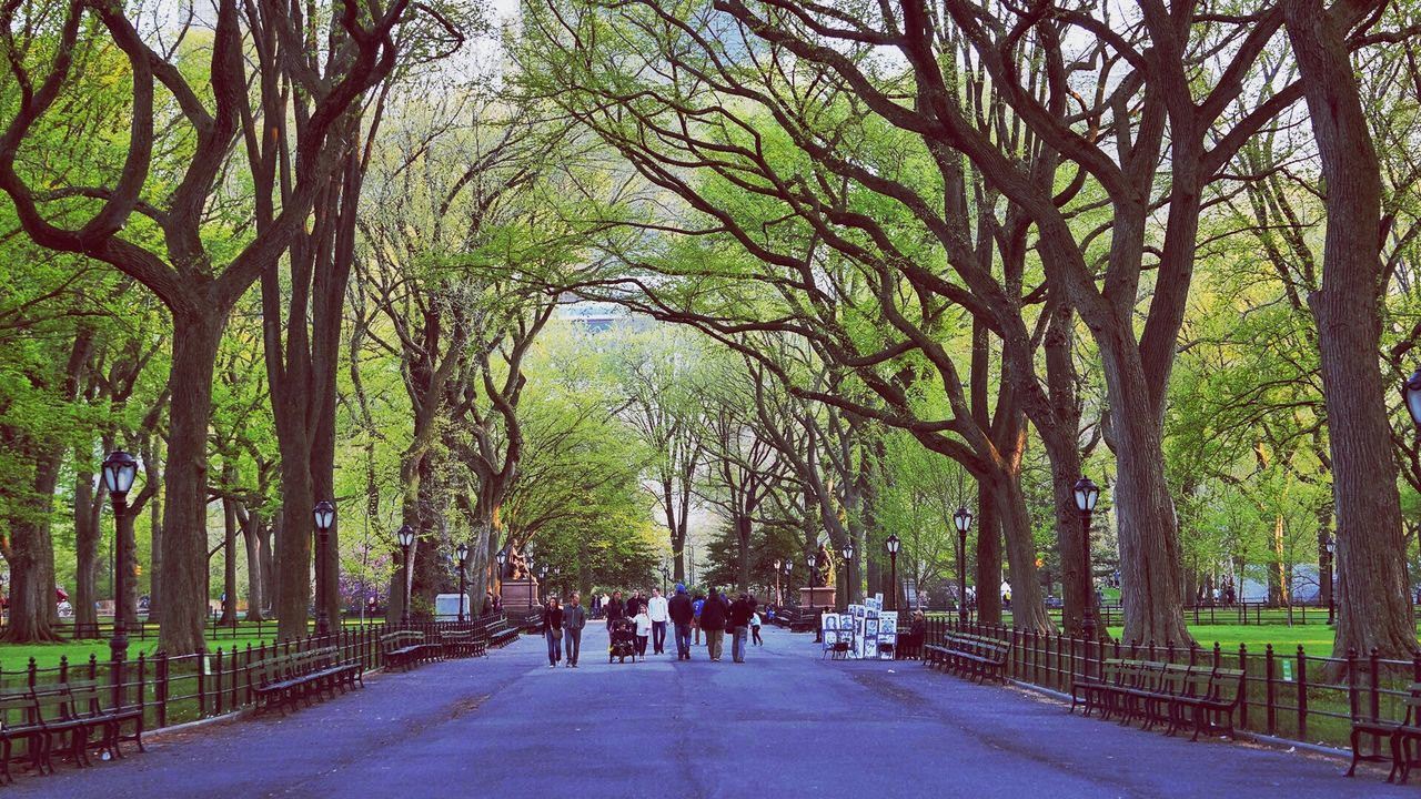 People Walking On Street Amidst Trees At Central Park