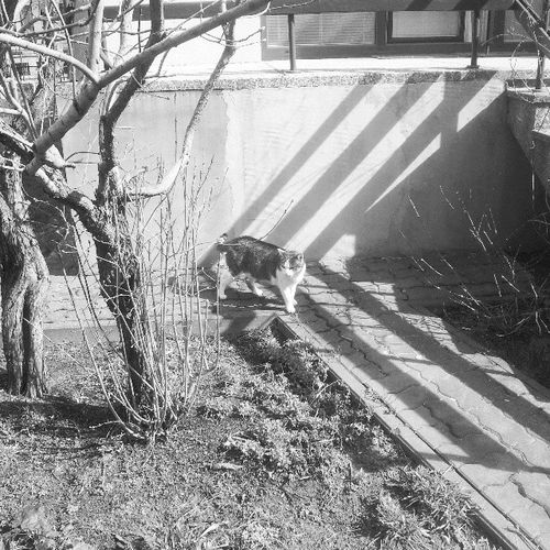 Jest to kot wiosenny. Instakot Instawiosna Instaciepło Instaszczęście