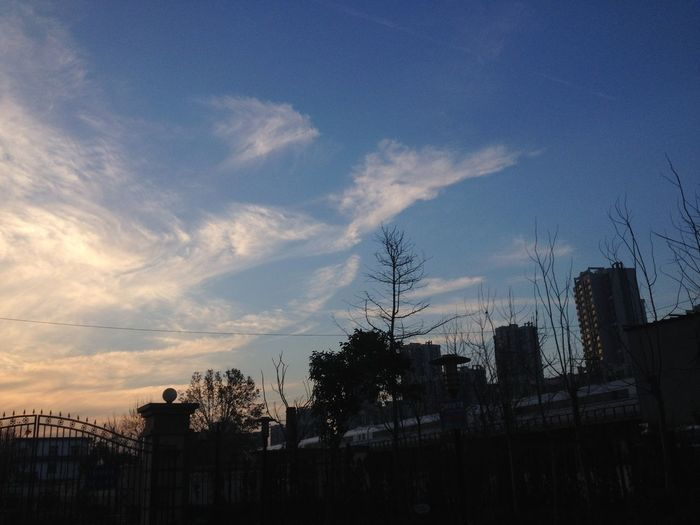 phoenix in sky Architecture Building Exterior Built Structure City Day Low Angle View Nature No People Outdoors Silhouette Sky Sunset Tree