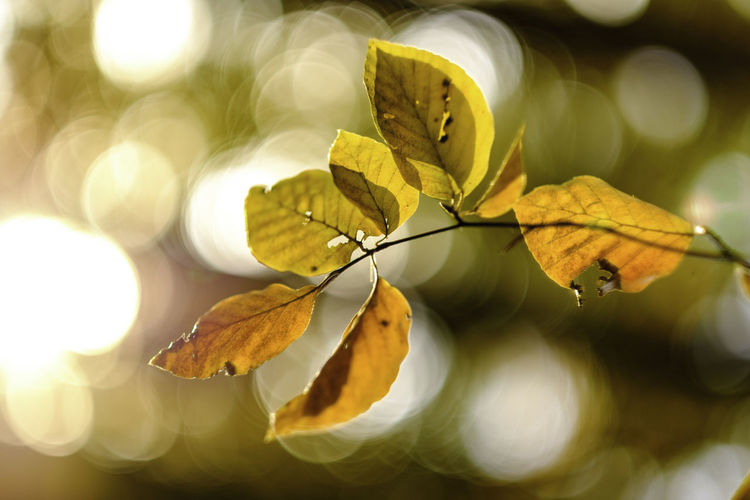 Last breath of life. Autumn Beauty In Nature Bokeh Close-up Day Decay Dof Fall Fragility Leaf leaves Forest Sunlight Light Leaves Nature No People Outdoors Plant Tree