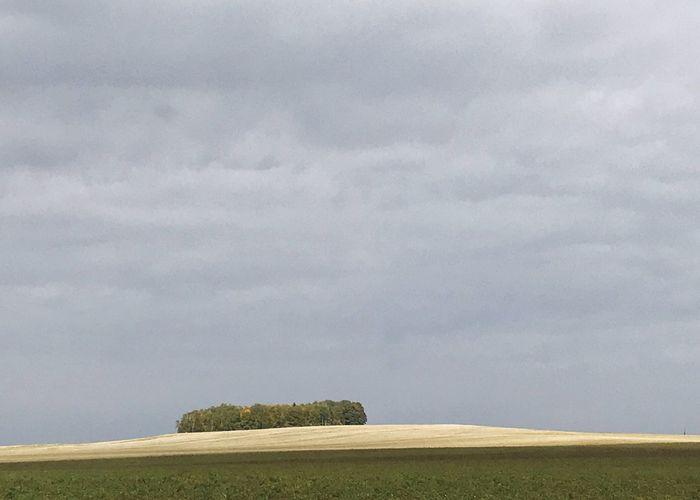 Tree island. Field Island Trees Cloud - Sky Landscape Sky Tree Grass Scenics Horizontal Outdoors Growth Rural Scene