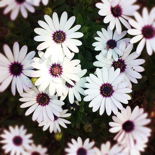 Flowers Sunny Day Focus