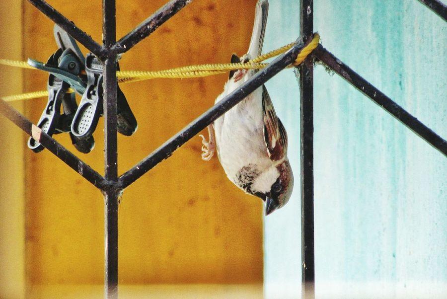 EyeEm Selects Sparrow In A Tree Sparrow On A Branch Sparrow Bird Sparrows Sparrow sparrow #bird nature rain Sparrows On A Branch Bird Photography Birds Bird Birds_collection Nature Photography Nature_collection Nature On Your Doorstep Nature Animals EyeEm Nature Lovers EyeEmNewHere EyeEmNewHere