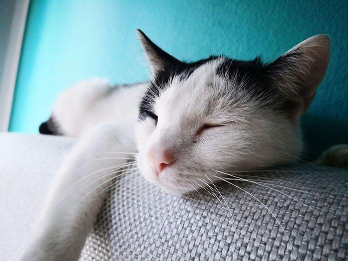 My sleeping cat😀 Pets Feline Domestic Cat Whisker Lying Down Portrait Close-up