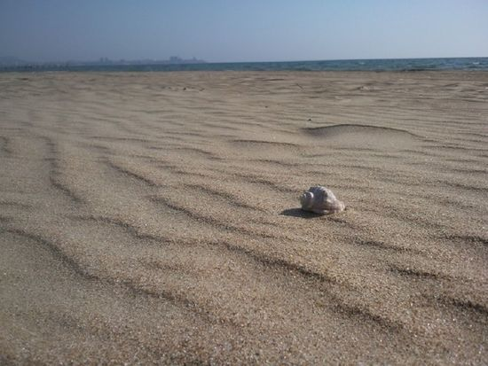 Beach Desert Outdoors Remote Sand Sand Dune Seashell Solitude Spring Tranquil Days Tranquil Live Tranquility Deserted Beach