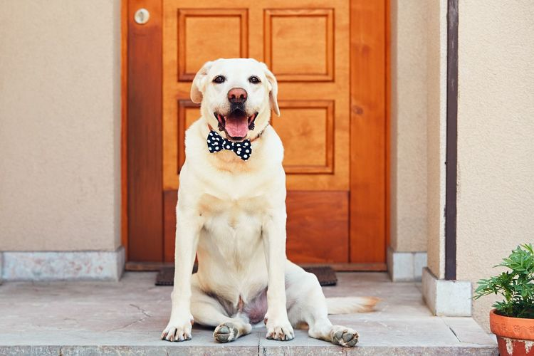 Portrait of dog sitting at doorway
