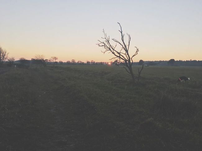 Sunset dog Weide fields landscape Inspirational Sky Plant Tree Tranquility Landscape Tranquil Scene Beauty In Nature No People Land Bare Tree Non-urban Scene Nature Clear Sky Sunset Scenics - Nature Branch Growth Environment Field Copy Space EyeEmNewHere