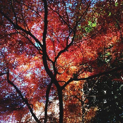 アップするの忘れてた!ずいぶん前の紅葉です Fall Fall Leaves Japan Beautiful