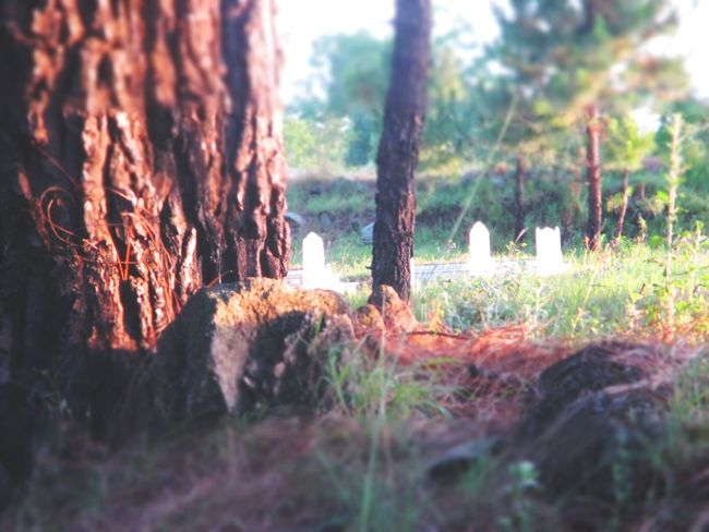 remember us ??? Gravestone Islamic Evening Tree Trunk Forest Sunlight Grass Close-up